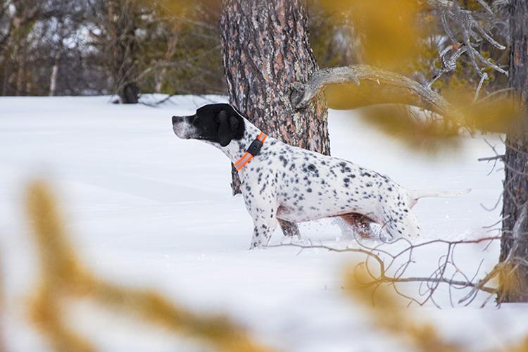 MiniFinder Atto: GPS tracker som spårar din hund