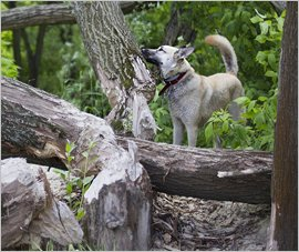 MiniFinder GPS Tracker Dog